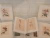kopies van platen van Lobelius en Redouté
